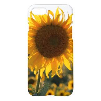 Sunflower garden.Beautiful flowers iPhone 7 Case