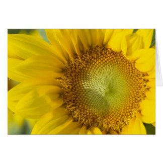 Sunflower Gold Shadow Card