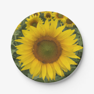 Sunflower Harvest Custom Paper Plates