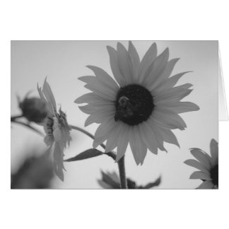 Sunflower in Black and White Card