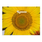 Sunflower in Kansas Postcard