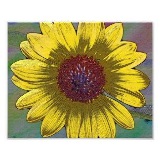 Sunflower in Pastel Photo