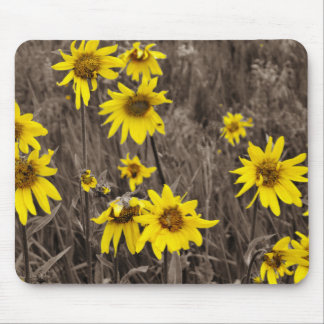 Sunflower in the Rocky Mountain Mousepad