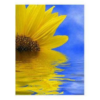 Sunflower in water postcard
