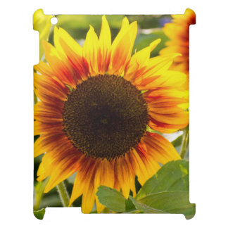 Sunflower Cover For The iPad 2 3 4
