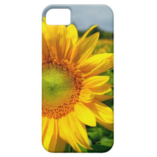 Sunflower iPhone 5 case