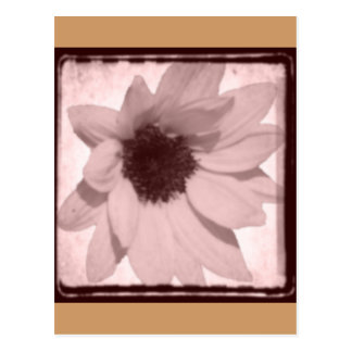 sunflower oldstyle postcard