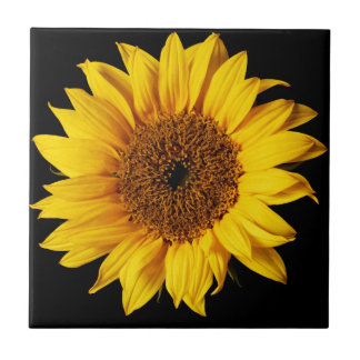 Sunflower on Black Background Small Square Tile