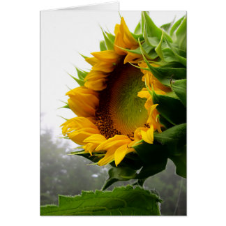 Sunflower Opening Card