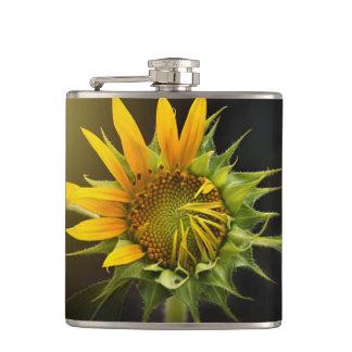 Sunflower Opening in Full Bloom Hip Flask