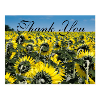 Sunflower Patch | Thank You Card Postcard