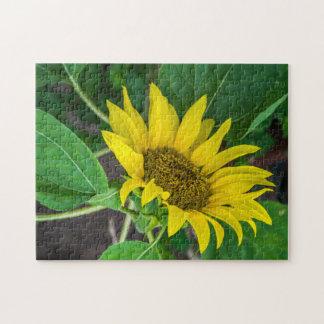 Sunflower photo puzzle
