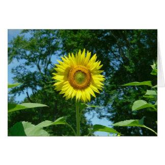 Sunflower photo taken by Lorette Starr Card