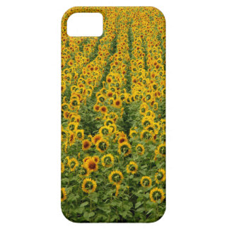 Sunflower Power iPhone Case Barely There iPhone 5 Case