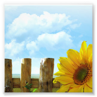 Sunflower Scene Photo Print