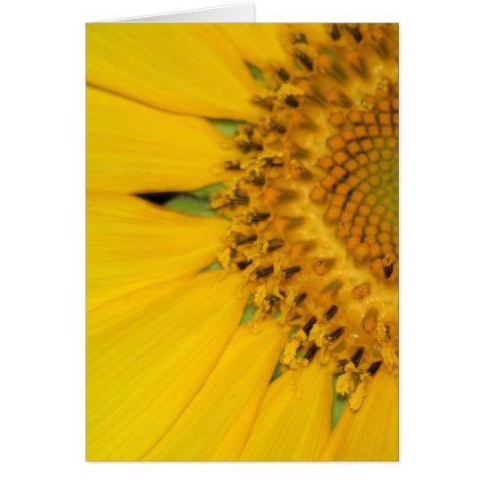 Sunflower Secrets card