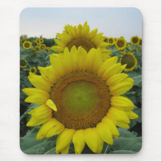 Sunflower Series Mouse Pad