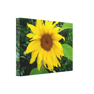 Sunflower Solo Gallery Wrapped Canvas
