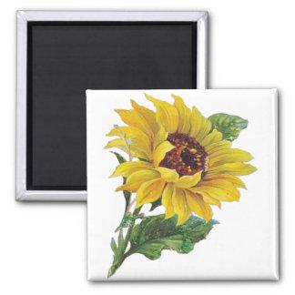 Sunflower Square Magnet