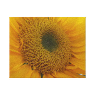 Sunflower Stretched Canvas Print