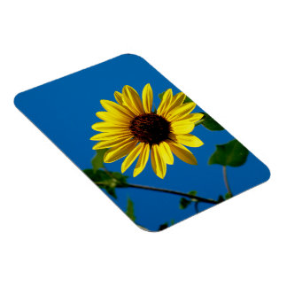 Sunflower Summer Rectangular Photo Magnet