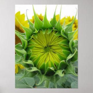 Sunflower Summer Series Poster