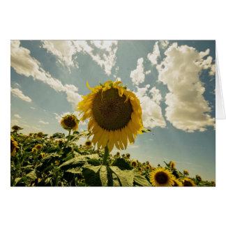 Sunflower, Sun Flower, Beautiful sky Card