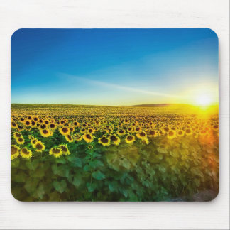 Sunflower - Sunflower Three Mouse Pads