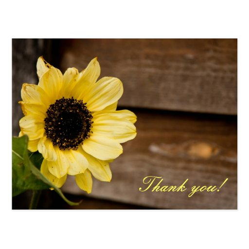 Sunflower thank you post cards