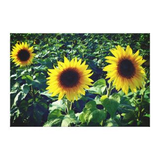 Sunflower Trio Wrapped Canvas Print