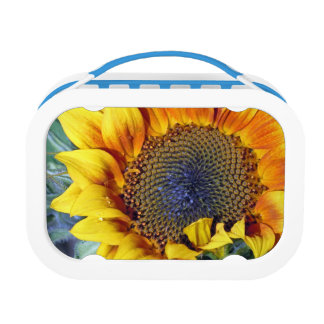 Sunflower with a Water Droplet Lunch Boxes