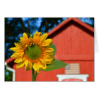 Sunflower With Red Barn Card