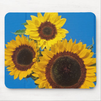 Sunflowers against blue fence mouse pad