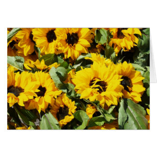 Sunflowers By The Dozen Card