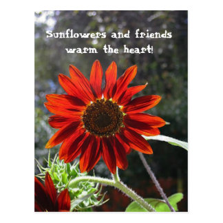 Sunflowers & Friends! Postcard