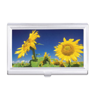 Sunflowers (Helianthus Annuus), Near Senekal Business Card Holder