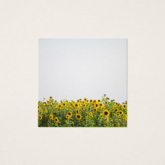 Sunflowers in a Field Square Business Card