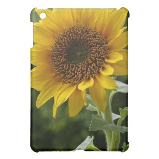Sunflowers iPad Mini Cases