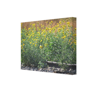 Sunflowers Near The Train Tracks Canvas Print