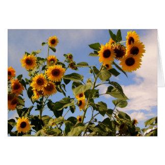 Sunflowers on a blue sky card