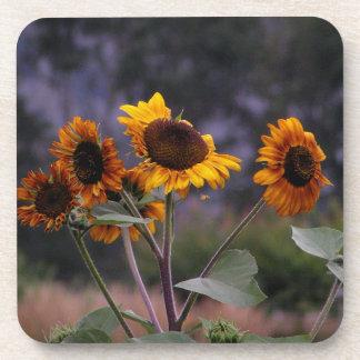 Sunflowers on display coaster