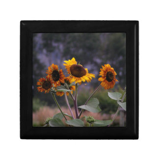 Sunflowers on display gift box