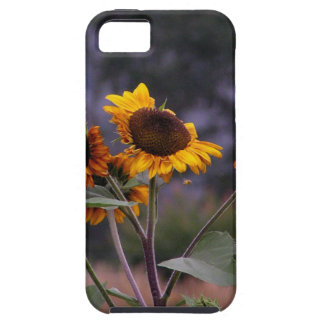 Sunflowers on display iPhone 5 cases