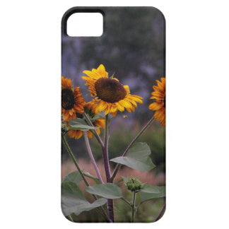 Sunflowers on display iPhone 5 covers