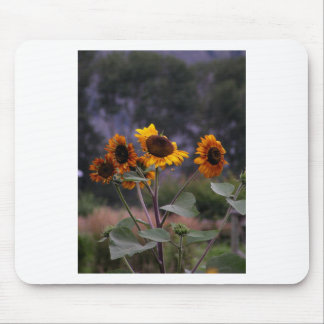 Sunflowers on display mouse pad