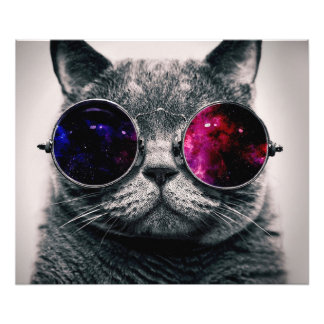 sunglasses cat photo print