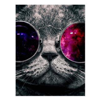 sunglasses cat postcard