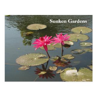 Sunken Gardens Pink Water lilies #81N 081 Postcard