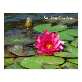 Sunken Gardens pink water lily #92  009292 Postcard