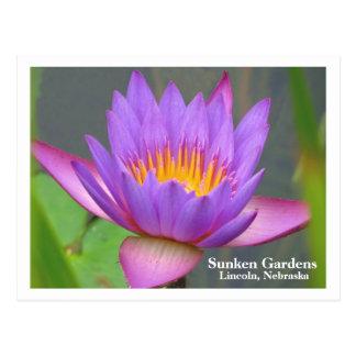 Sunken Gardens Purple Water Lily 2008 #85n 0085 Postcard